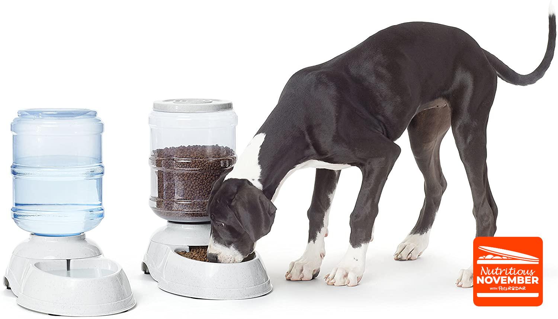 Best Automatic Pet Feeder Petsradar