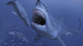 The largest shark to ever stalk the seas, Megalodon, snaps at a potential prey in this artist's conception of the extinct beast.