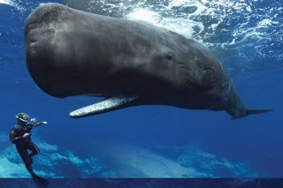 whales, giants of the deep, cultures