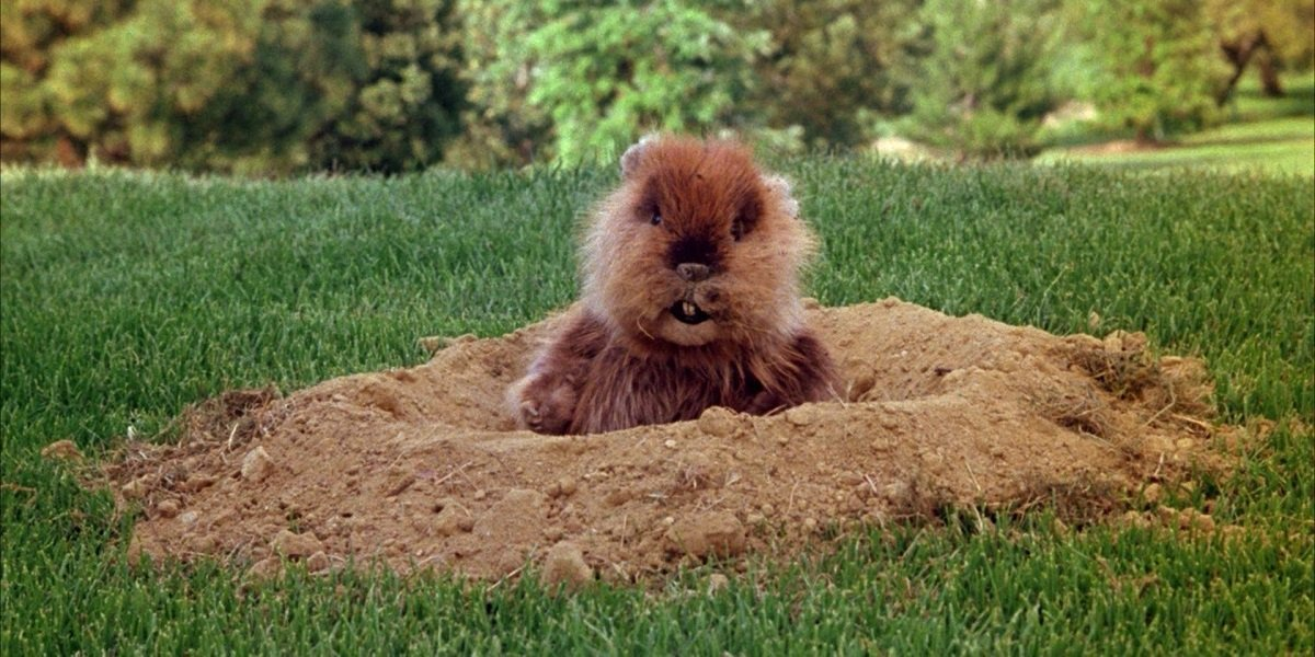 Was The Gopher From Caddyshack All In The Groundskeeper's Head?