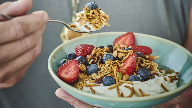 Bowl and spoonful of mealworm granola with yoghurt and fruit
