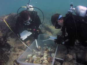 Coral reef damage inspected in Florida Keys