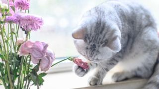 A grey cat playing with flowers in a vase