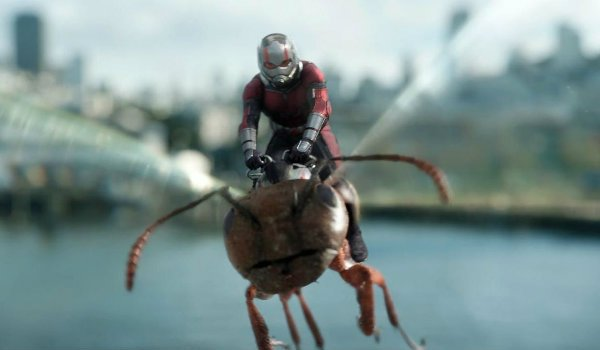 Ant-Man and the wasp seagull scene