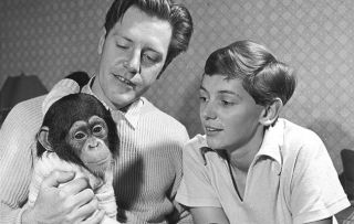 Gerald Durrell with Chumley the chimp and wife Jacquie