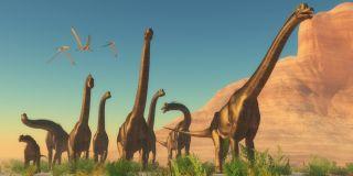 Dinosaur Herd