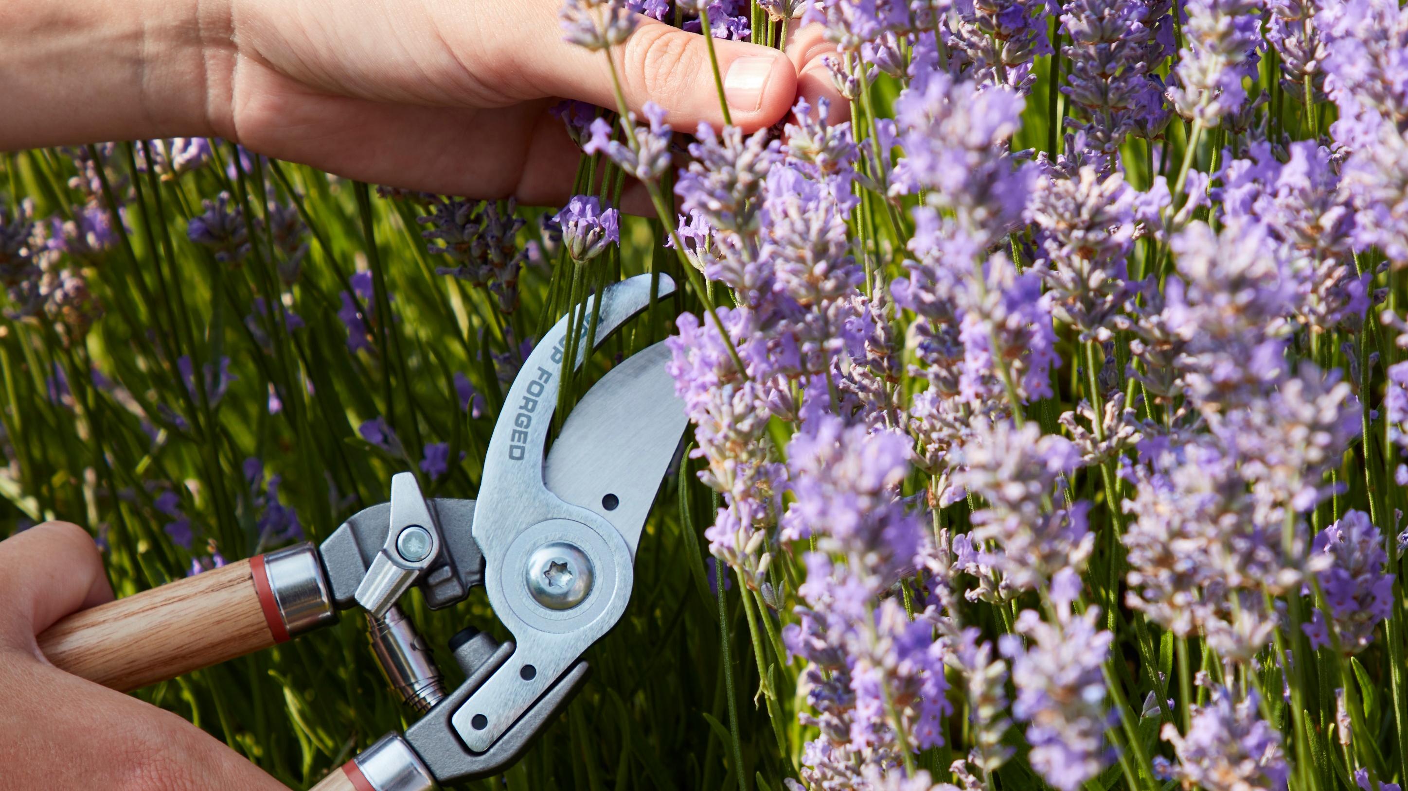 Wilkinson Sword Comfort Bypass /& Anvil Garden Pruner Pruning Pruners Secateurs
