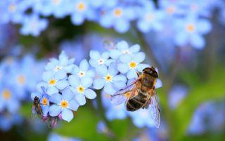 Audubon Adventures: The Buzz About Native Bees