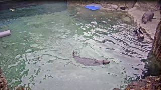 Three otters in their enclosure