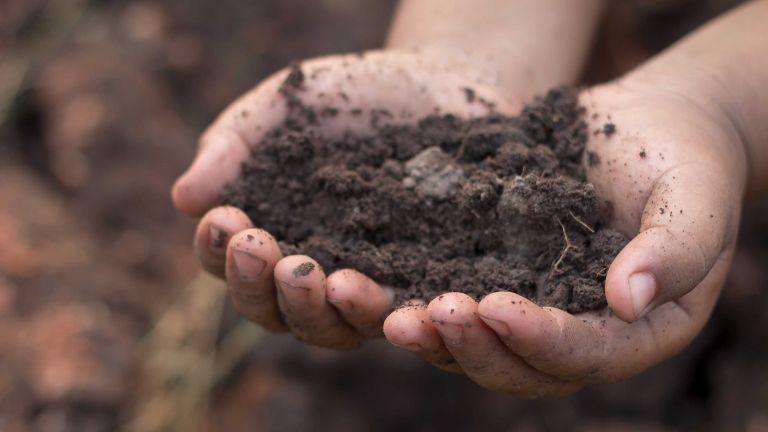 compost vs topsoil: soil in hands