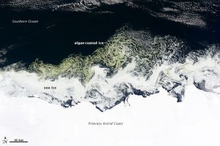These green swirls were spotted off the coast of East Antarctica on Feb. 27 by NASA's Terra satellite.