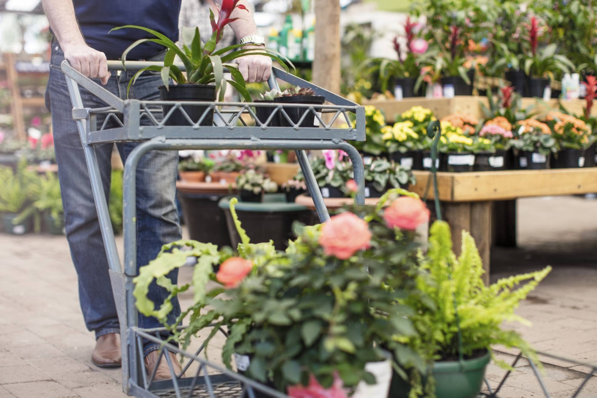which garden centres are open tomorrow?