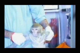 Iran's Space-Traveling Monkey #2