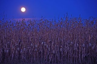 The Full Corn Moon will rise on Sept. 2, 2020.