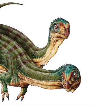 Two Chilesaurus diegosuarezi dinosaurs