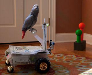 Bird Buggy Robots