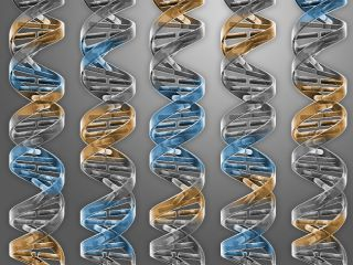 synthetic genome