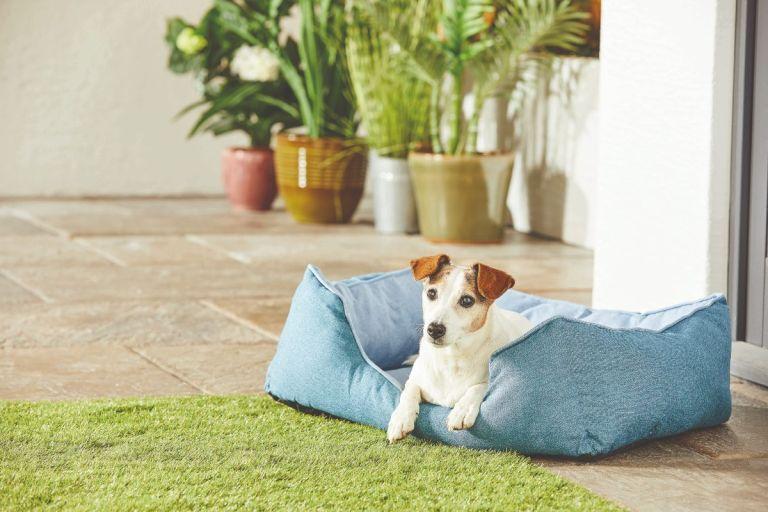 aldi dog bed