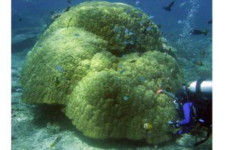 coral reef news