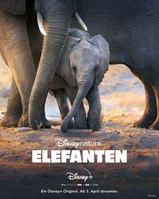 Plakat: Neu bei Disney+ Disneynature Elefanten