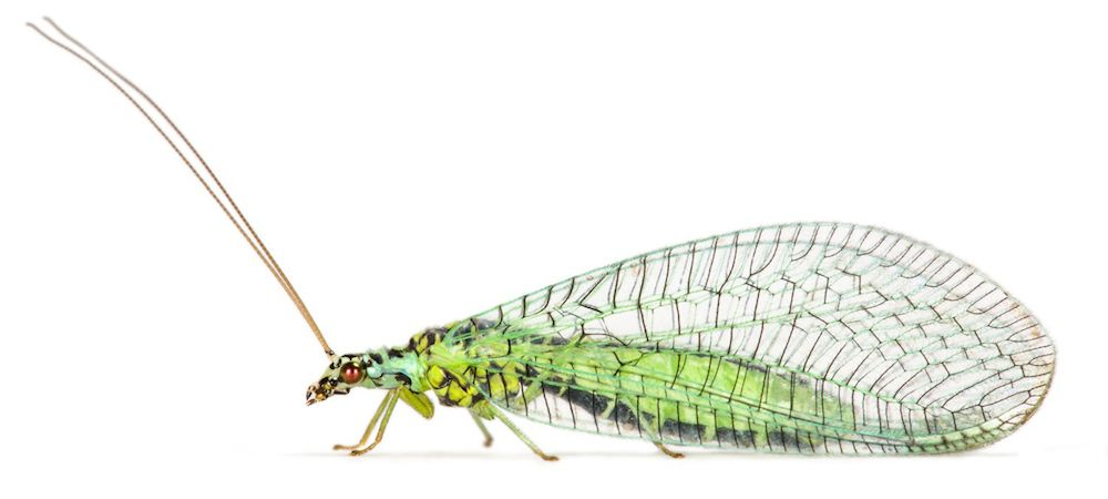 Insect Family Tree Maps 400 Million Year Evolution Live Science