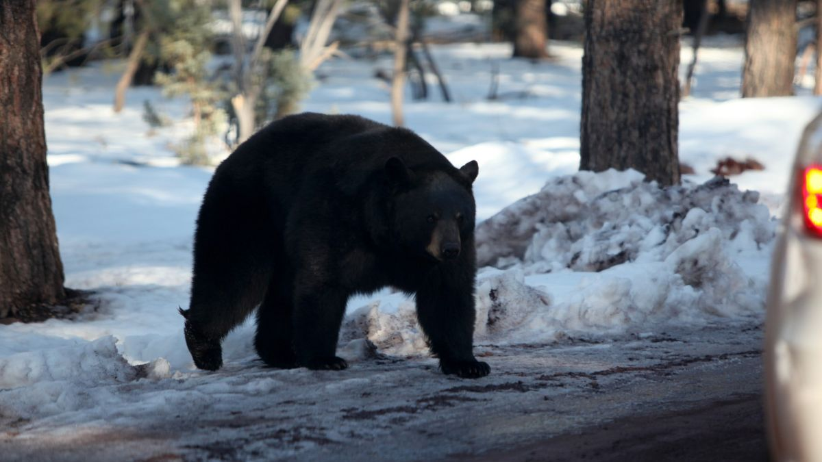 A bear behind: woman gets bitten on backside while going to the bathroom