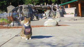 Chester the Cat at Sequoia Park Zoo