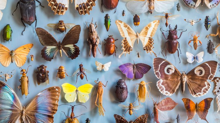 how to get rid of insects at home - collection of insects bugs - GettyImages