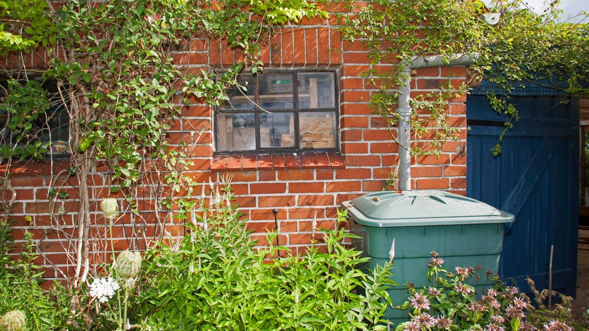 Experts explain the rainwater benefits for watering your plants