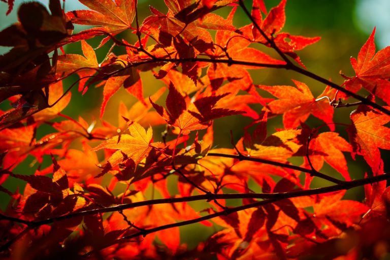 use autumn leaves to improve soil with Alan Titchmarsh