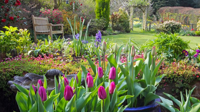 garden with tulips and bench