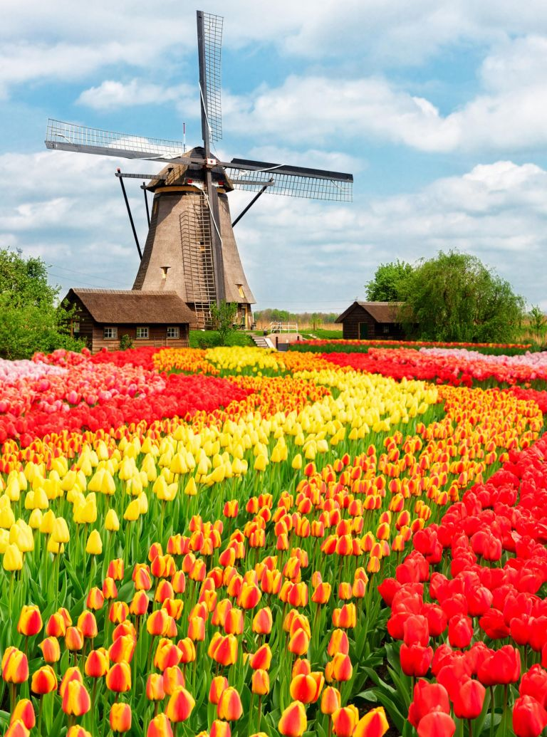 Holland tulips holiday with Charlie Dommick
