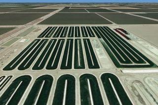 Algae ponds