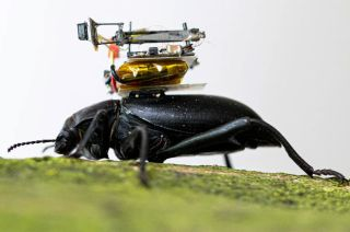 Scientists create camera so small it can be carried by a beetle