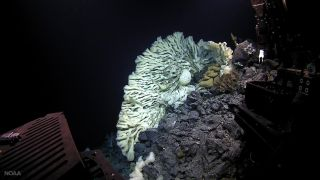 A sponge the size of a minivan, the largest on record, was found in 2015 during a deep-sea expedition in Papahānaumokuākea Marine National Monument off Hawaii. These bizarre creatures are humanity's most distant animal cousins, according to new research.