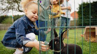 best rabbit runs