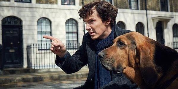 sherlock benedict cumberbatch dog