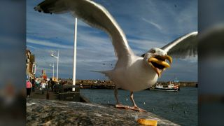 The photo of a fry-snatching gull, captured in 2011 by photographer Hannah Huxford, quickly went viral and is now featured in a Google billboard campaign.