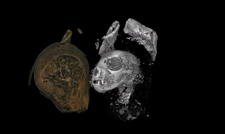 This mummified kitten was strangled before its death, new micro CT scans show
