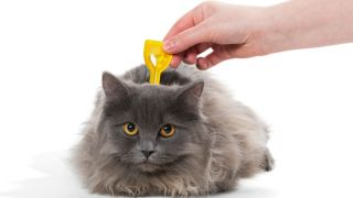 flea treatment for cats