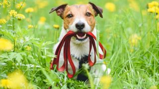 how to choose safest flea treatment for dogs