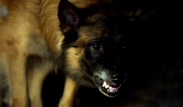 The Zoo Trailer Is About As Ridiculous As You Would Expect Cinemablend