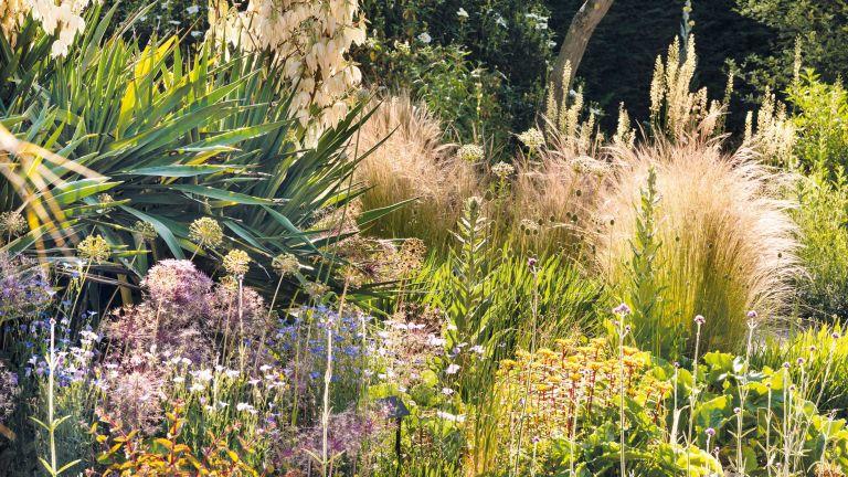 low maintenance garden border ideas – drought tolerant grasses and yucca