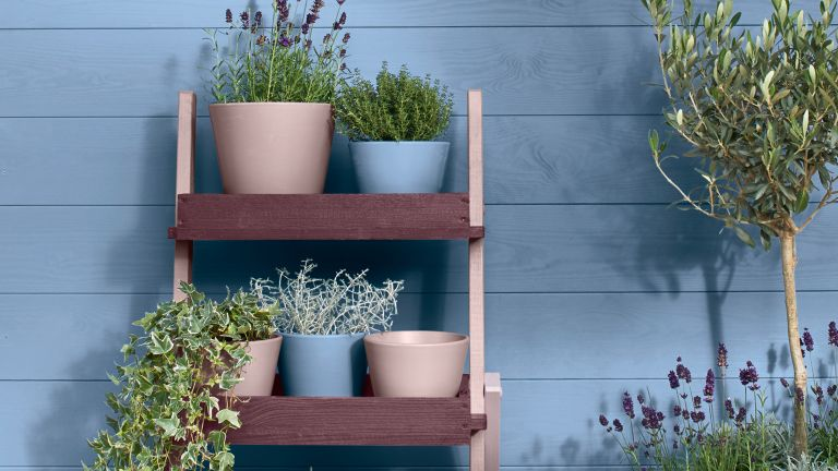 Plant stand: colour shelving unit painted in Cuprinol paint with herbs and plants