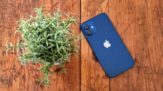iPhone 12 on a trunk with a plant