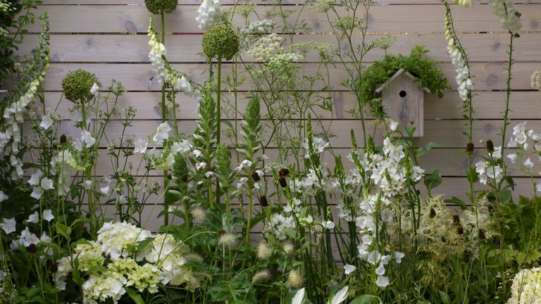 garden fence decoration ideas – white stained fence with plants and birdhouse