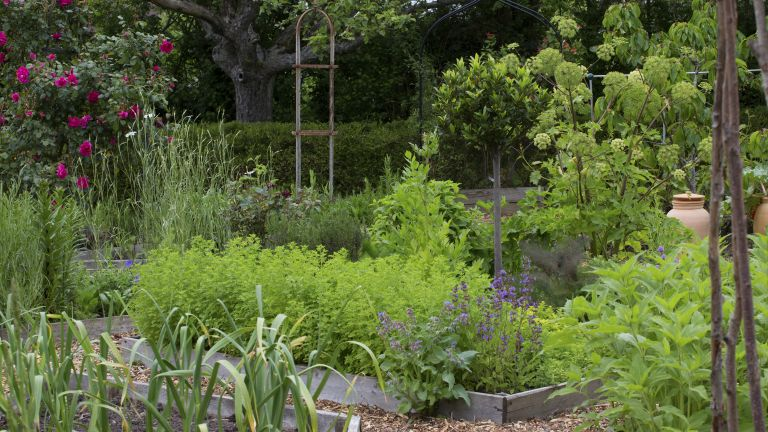 companion planting: herbs in a vegetable garden