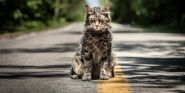 Pet Sematary's Director Says The Cats Were A 'Pack Of Divas'