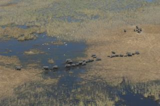 The first pan-African aerial survey will count elephants in 22 countries.