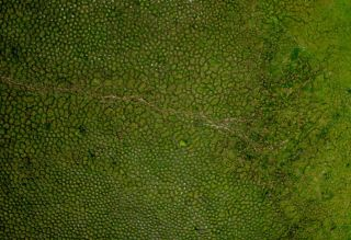 Surale Aerial View